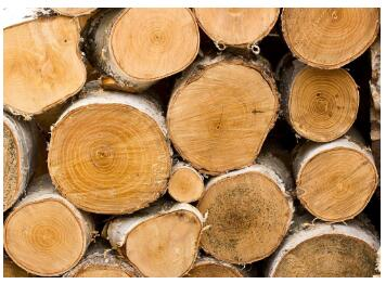 """随着""""金九银十""""推动,国内木材市场热点或将被激活"""